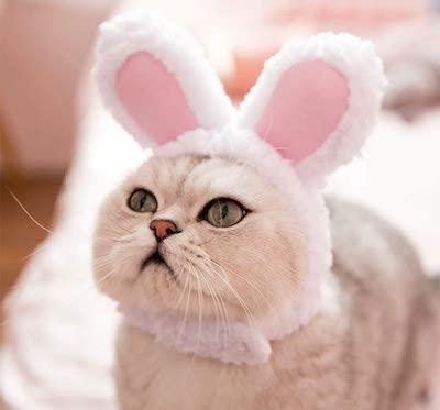 TODU 猫帽子 コスプレ うさ耳変身 ヘアバンド ペット用帽子